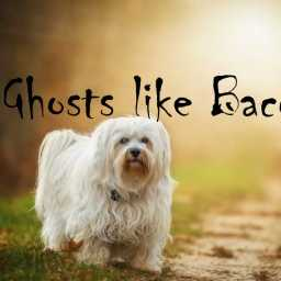 Ghosts like Bacon PART 3: Ghost Dog